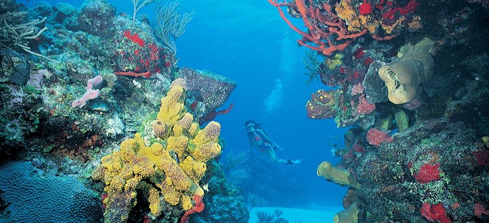 Escudo_Diving_in_the_Coral_Reef_Ac_arrecifedecoralcancun